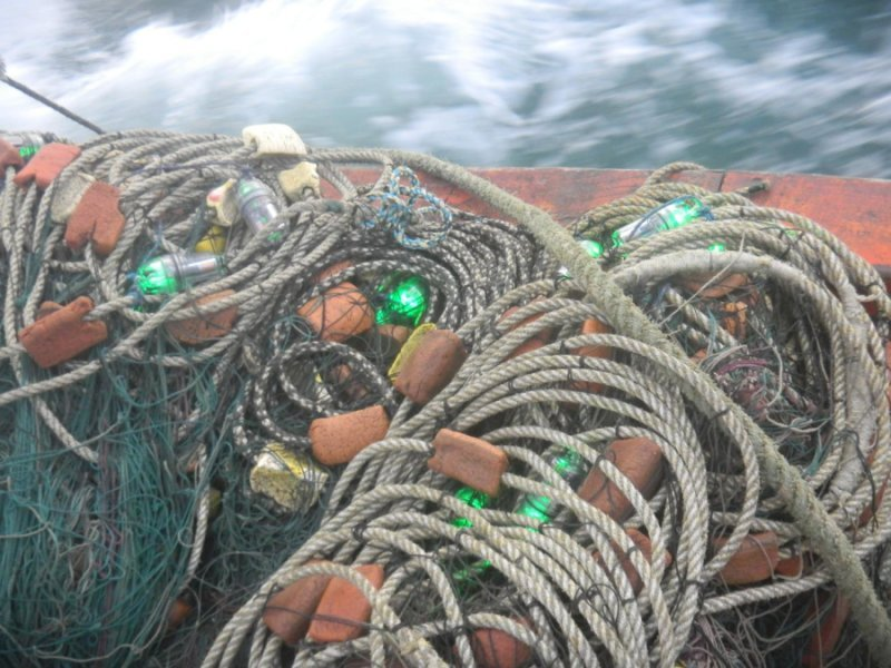 These light up fishing nets could save sea turtles innovation