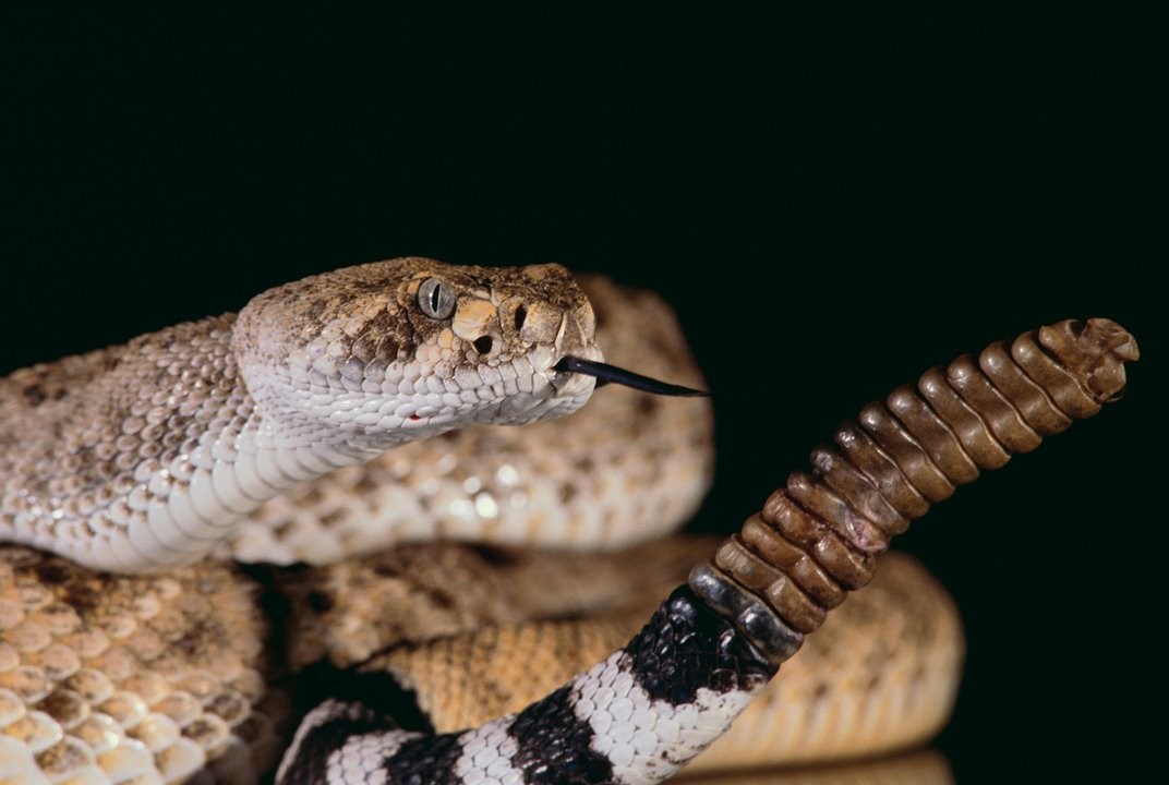 Why A Single Vial Of Antivenom Can Cost $14,000 | Smart