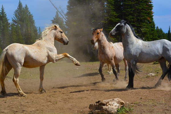 travel best places see wild horses north america