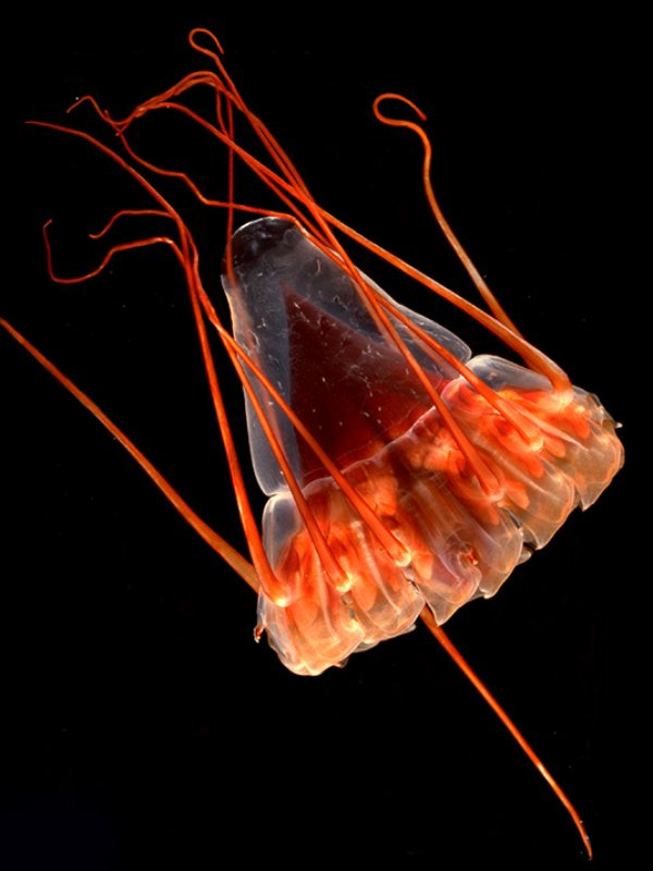 bioluminescence light is much better down where it�s