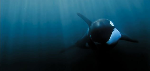 Blackfish: Documentary or Propaganda? | Skeptoid