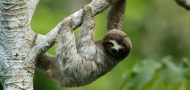 How Sleepy Are Sloths And Other Lessons Learned Science