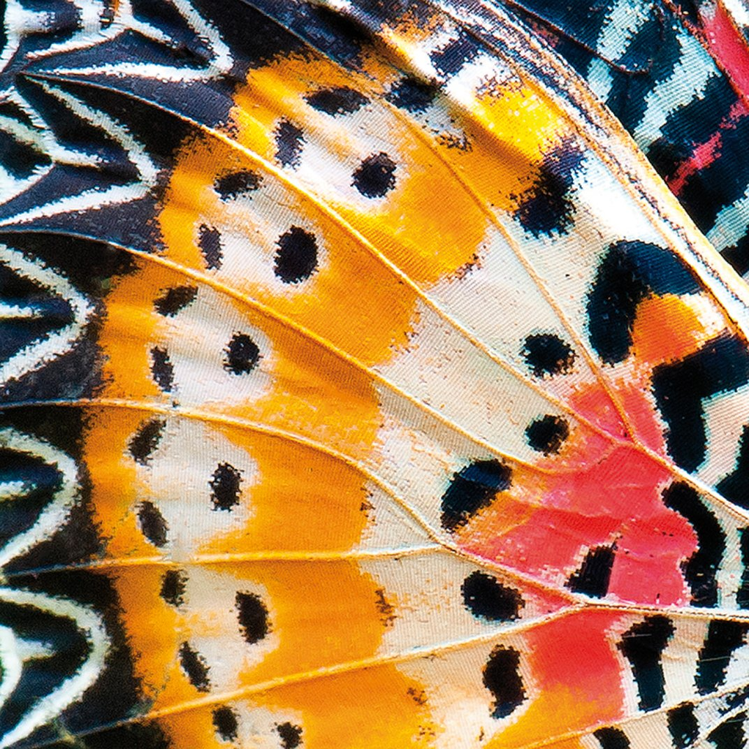 """patterns in nature questions Philip ball's patterns in nature is a jaw-dropping exploration of why the world looks the way it does, with 250 color photographs of the most dramatic examples of the """"sheer splendor"""" of ."""