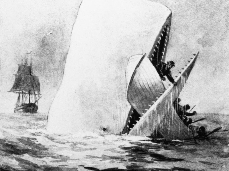 moby dick the true story