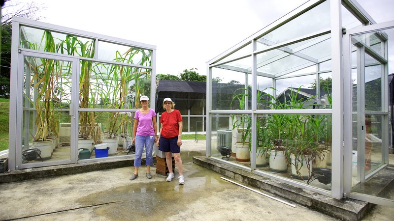 To decode the mystery of corn smithsonian scientists for Modern greenhouse design