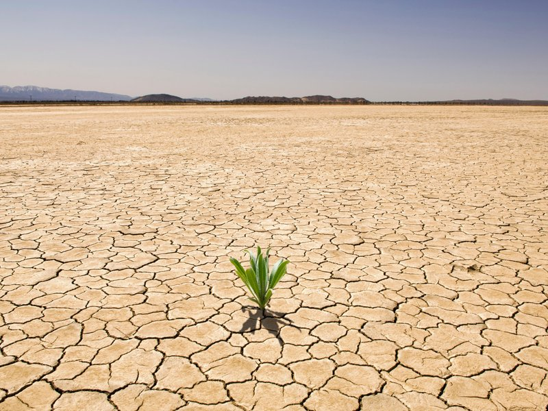 How to Plant in Drought Conditions