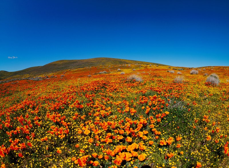 Best Places To See Wildflowers Around The United States