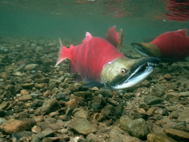 Msds for salmon sperm dna idea and