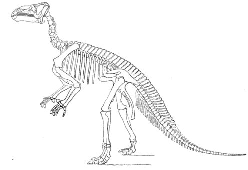 printable dinosaur skeleton template - pulling back the curtain on dinosaur science science
