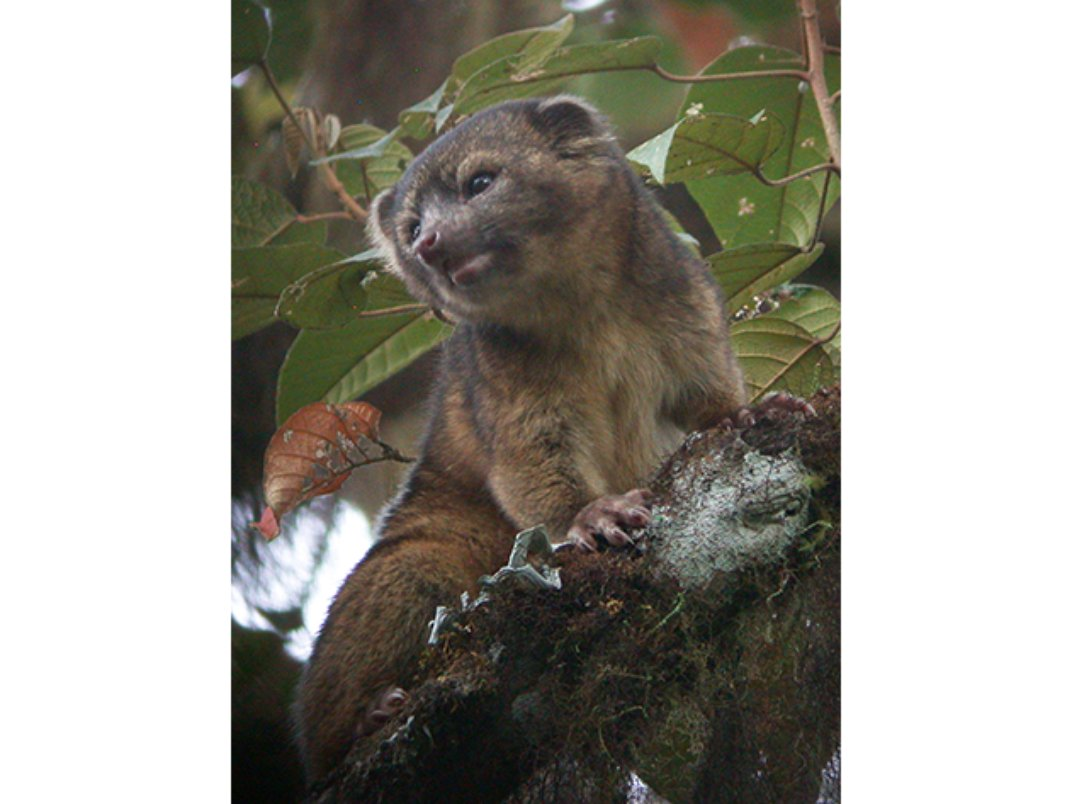 For the First Time in 35 Years, A New Carnivorous Mammal ...
