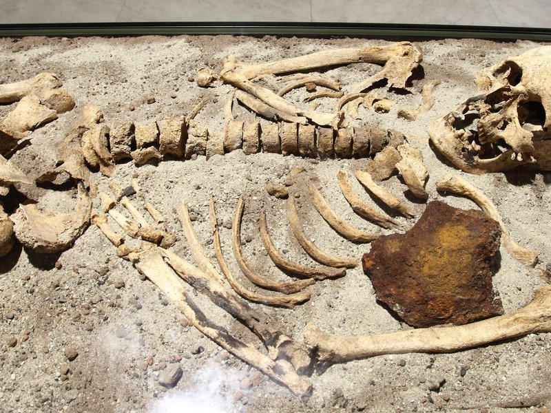 Maximum age limit for radiocarbon hookup of fossils